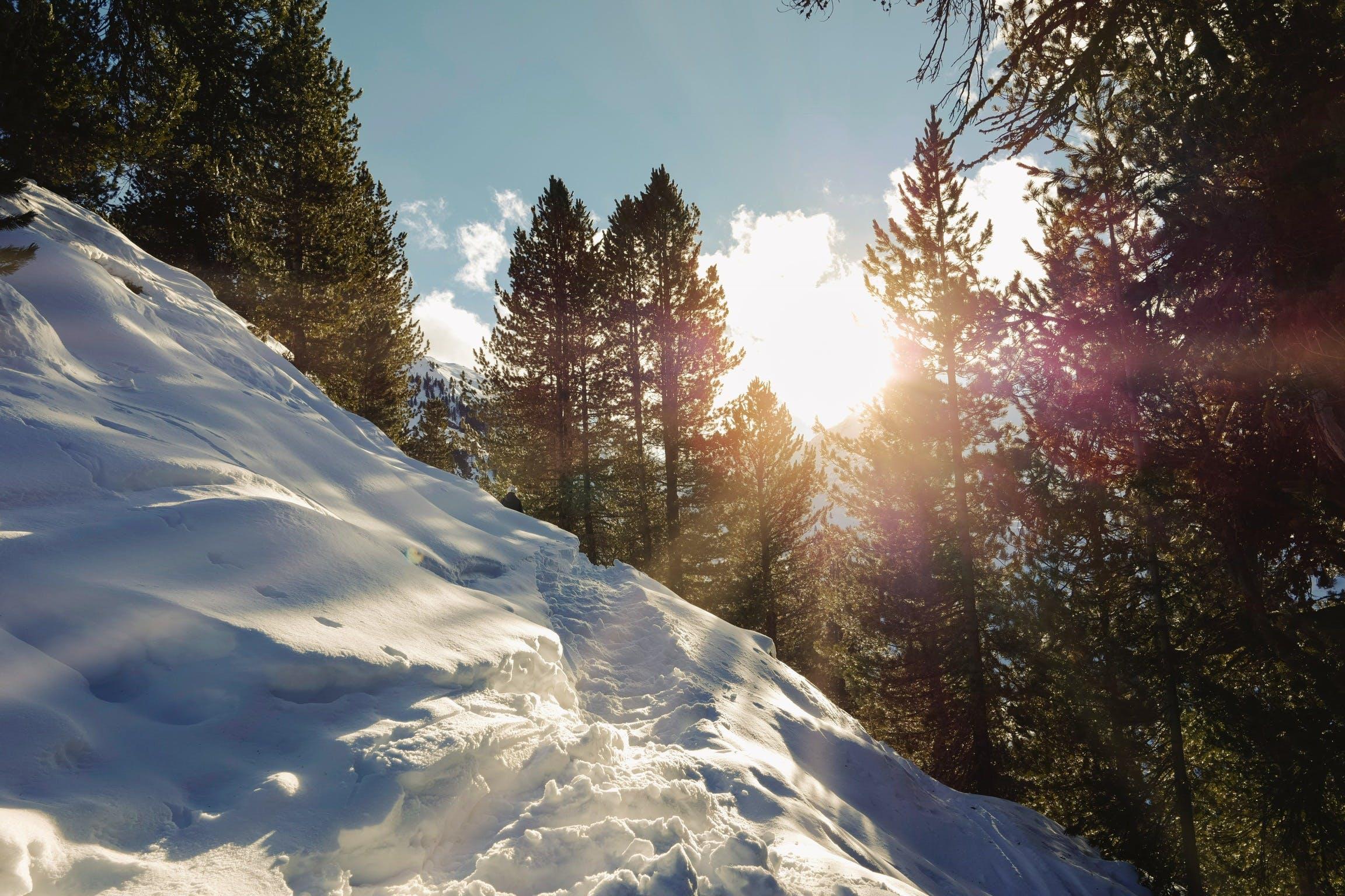 Free stock photo of free, gold, powder, skiing