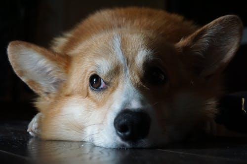 Fotos de stock gratuitas de adorable, animal domestico, canino