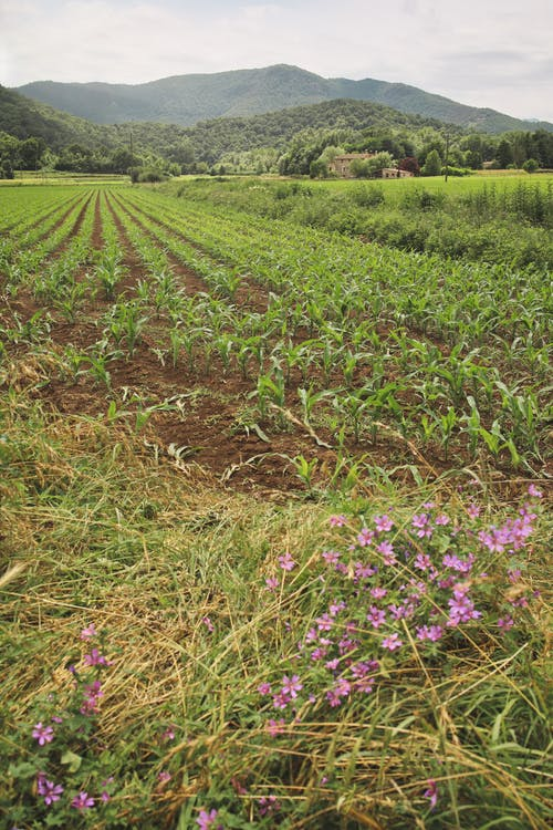 Základová fotografie zdarma na téma cestování, farma, flóra