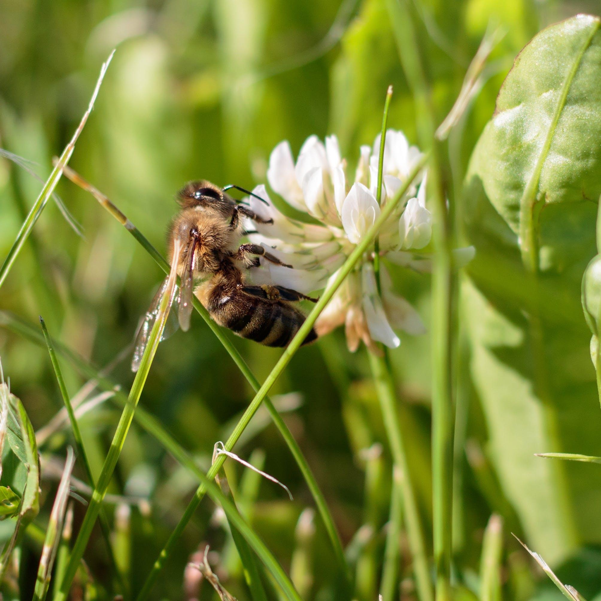 Free stock photo of animal, bee, bloom, blooming