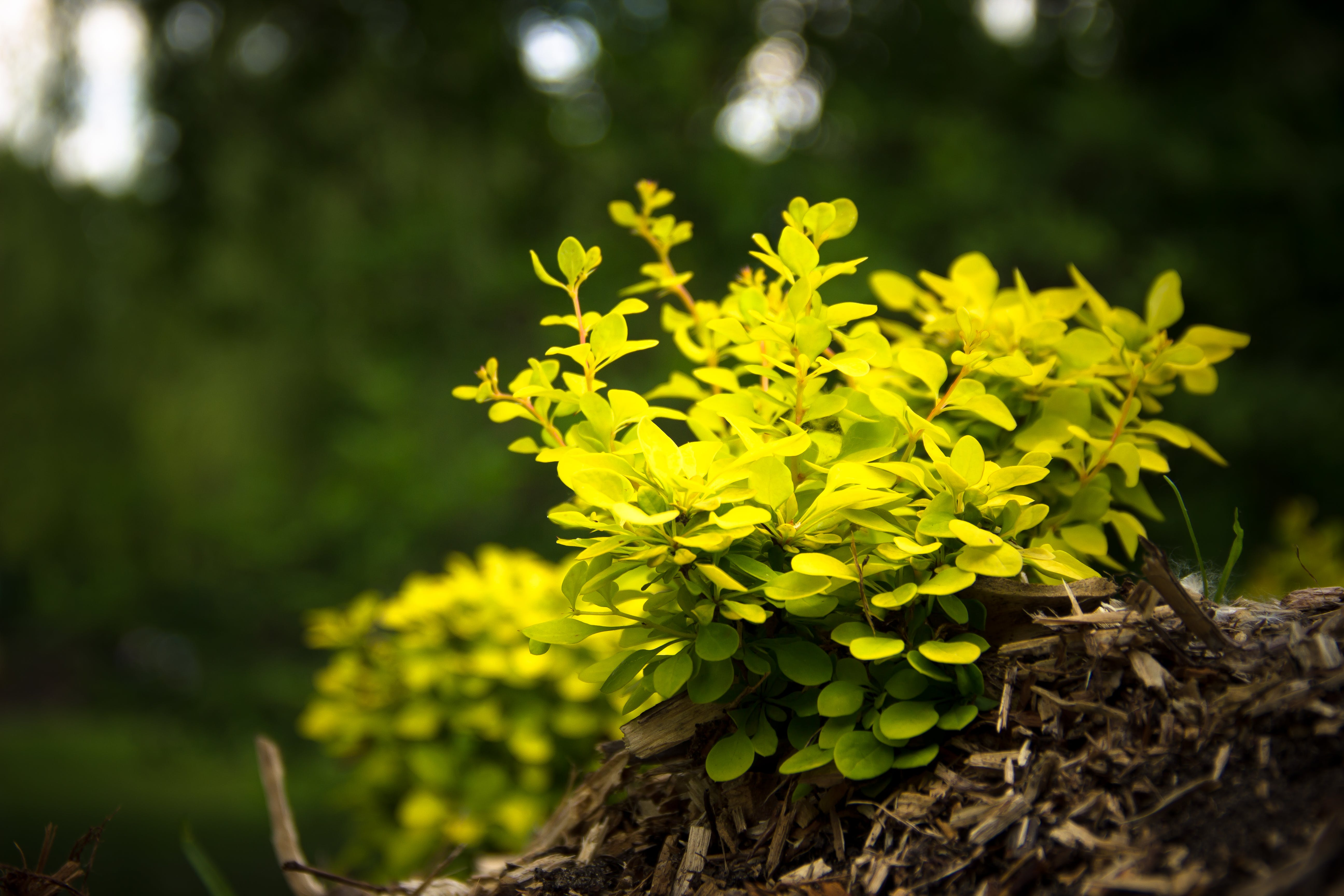 Close-up Photography of Yellow Leaf Plant