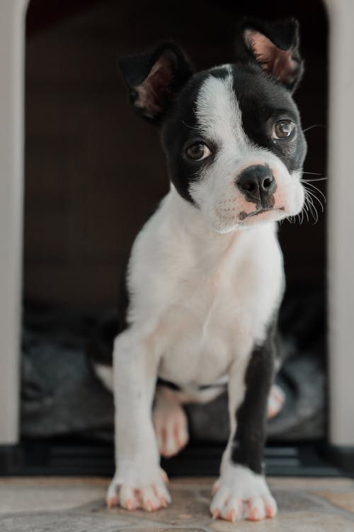Immagine gratuita di alla ricerca, animale, animale domestico