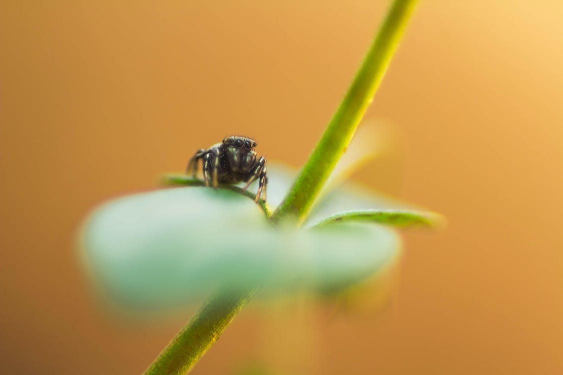 Foto d'estoc gratuïta de aràcnid, aranya, natura