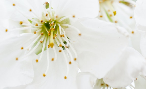 Closeup Photography of White Petaled Flowers