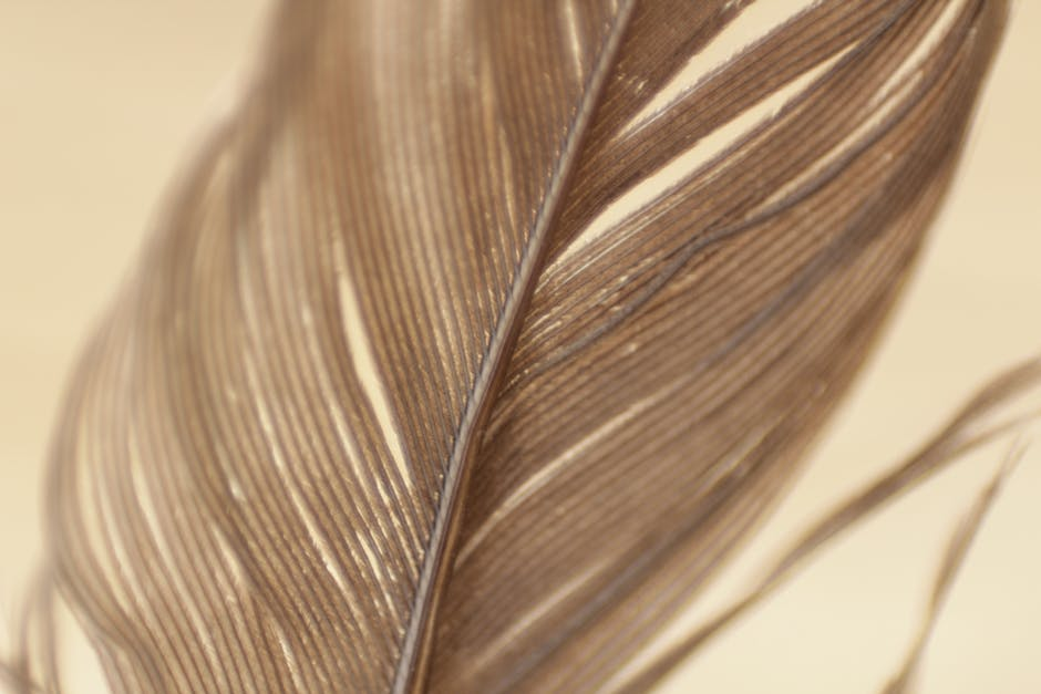 Nature macro feather detail