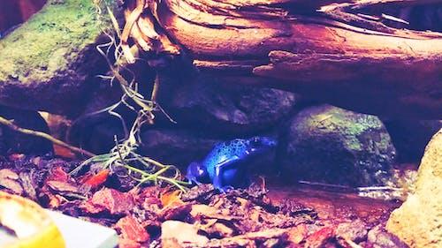Fotobanka sbezplatnými fotkami na tému žaba