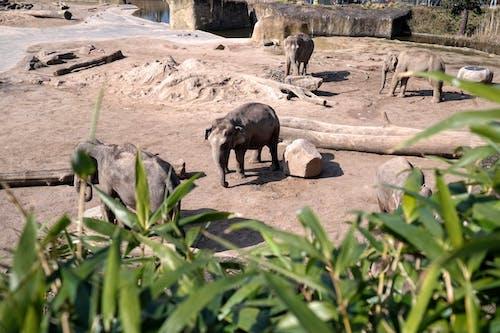 Fotobanka sbezplatnými fotkami na tému slon