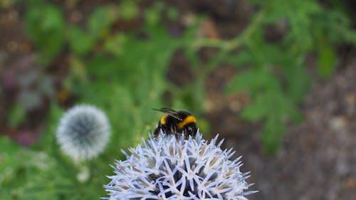 Fotobanka sbezplatnými fotkami na tému včela