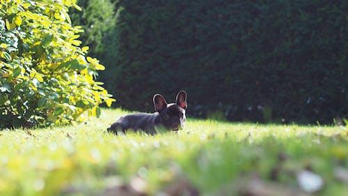 Fotobanka sbezplatnými fotkami na tému domáce zviera, psík, šteniatko