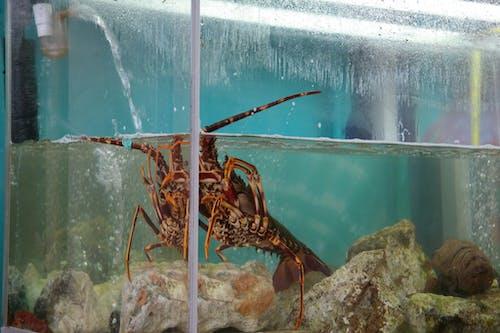 Fotobanka sbezplatnými fotkami na tému homár