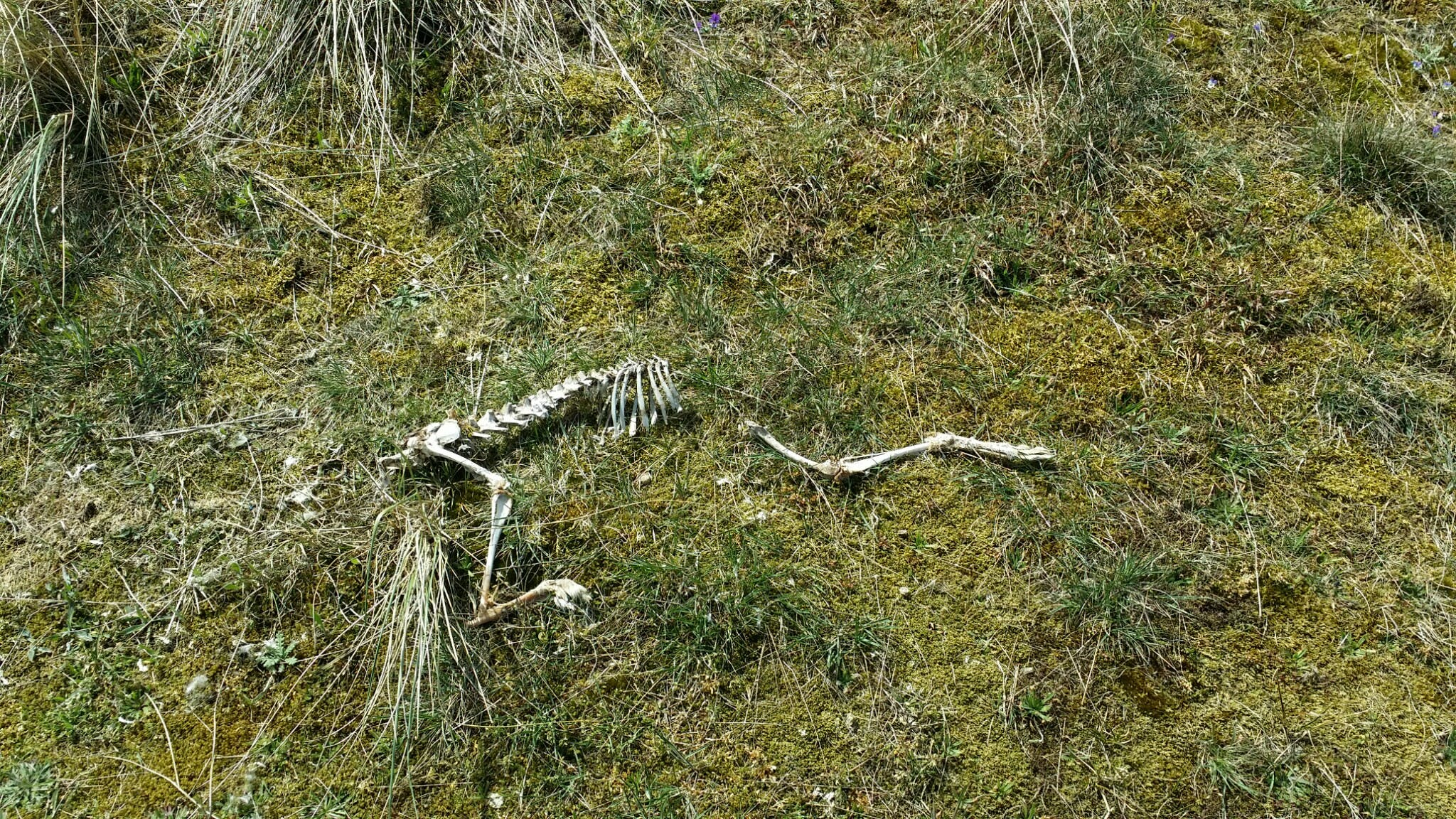 Free stock photo of bones, field, skeleton