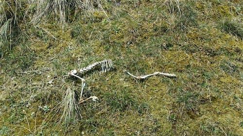 Fotobanka sbezplatnými fotkami na tému hracie pole, kosti, kostra