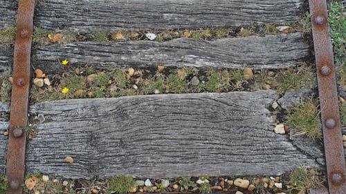 Fotobanka sbezplatnými fotkami na tému woodpath