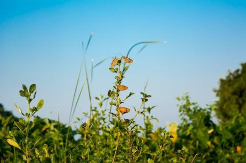 Free stock photo of bee, blue sky, butterflies, butterfly