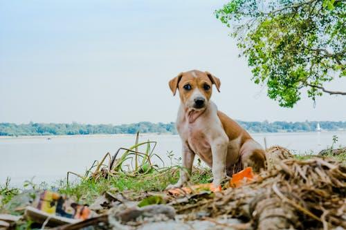 Free stock photo of cute animals, dog, puppy