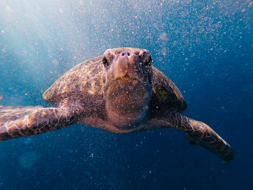 Close-Up Shot of a Sea Turtle Swimming Underwater