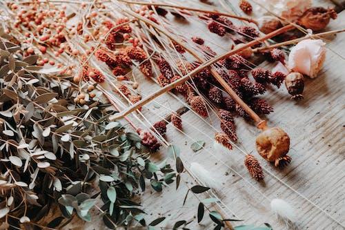 Ingyenes stockfotó faasztal, levelek, növényvilág témában