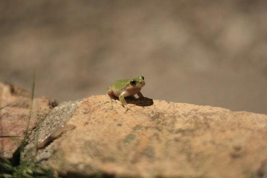 Free stock photo of nature, animal, stone, wild