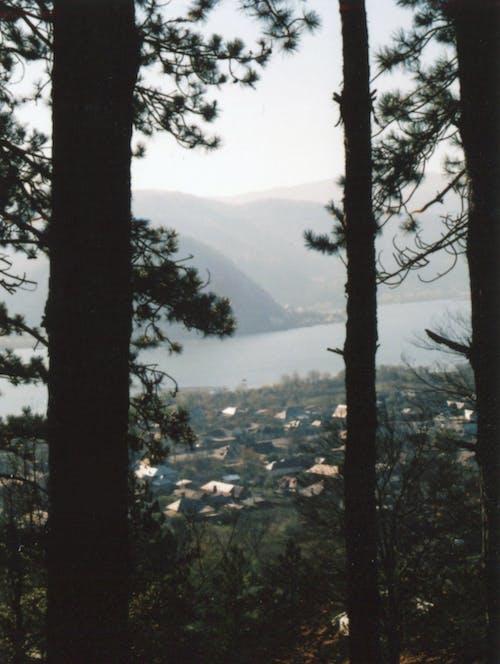 Бесплатное стоковое фото с вечнозеленый, гора, город, дерево