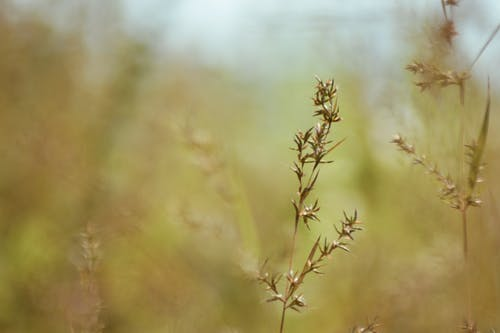 Free stock photo of beautiful, cornfield, flowers, focus