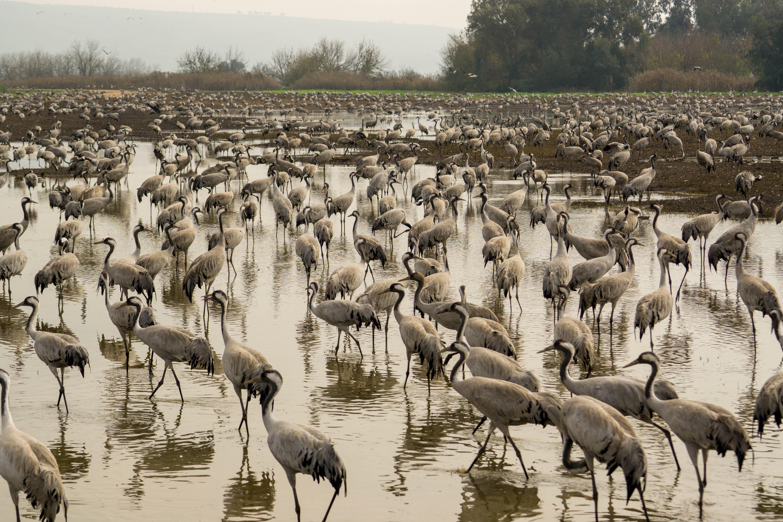 Free stock photo of Hula Lake, Israel