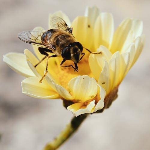 Fotobanka sbezplatnými fotkami na tému flóra, hmyz, kvet