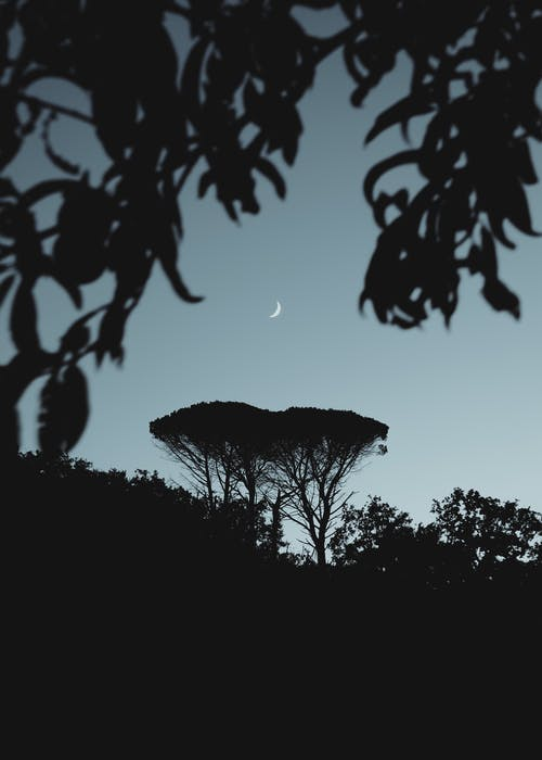 Fotos de stock gratuitas de al aire libre, arboles en la noche, belleza de la naturaleza