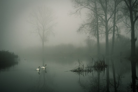 Photo of Two White Ducks on Water during Fog