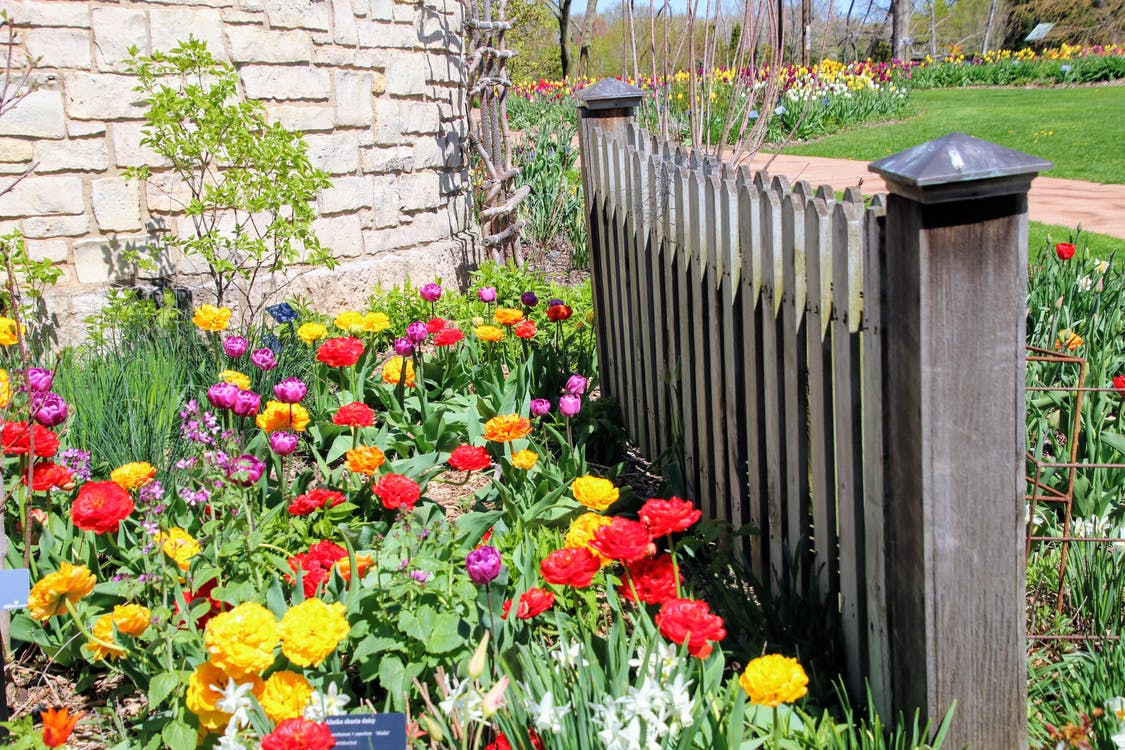 beautiful flowers, fence