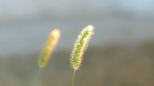 天性, 早晨的太陽, 自然攝影, 野生 的 免費圖庫相片