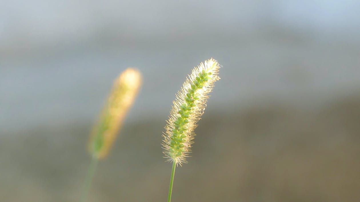 morgensol, natur, naturfotografi