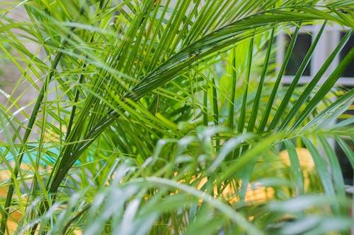 Бесплатное стоковое фото с дерево, лето, лист