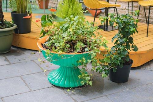 Бесплатное стоковое фото с ботанический, гончарное изделие, горшок