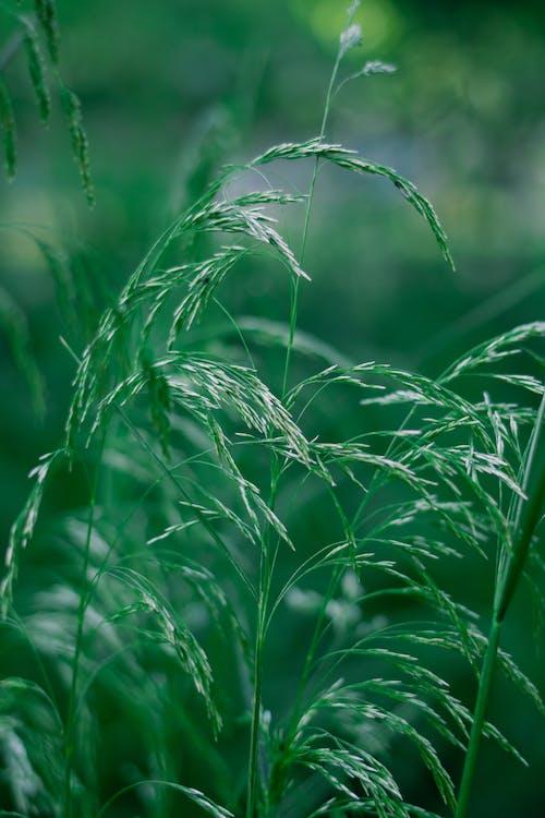 Бесплатное стоковое фото с газон, дождь, злак