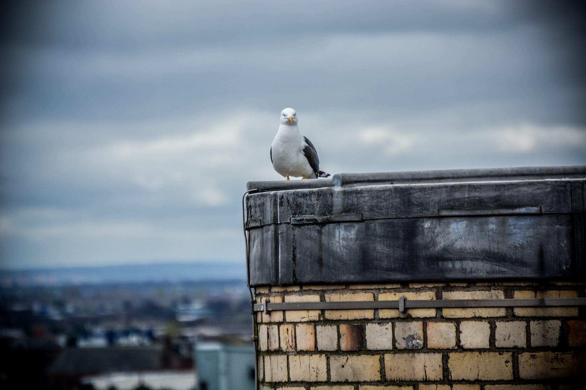 Free stock photo of animal, awesome, bird, cool
