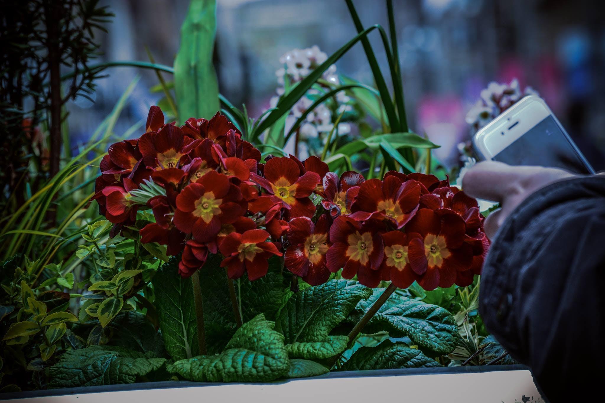 Free stock photo of beautiful, beautiful flowers, bright colours, cute