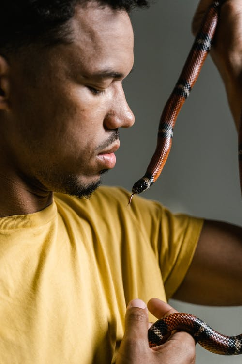 おとこ, ヘビ, ヘビ恐怖症の無料の写真素材