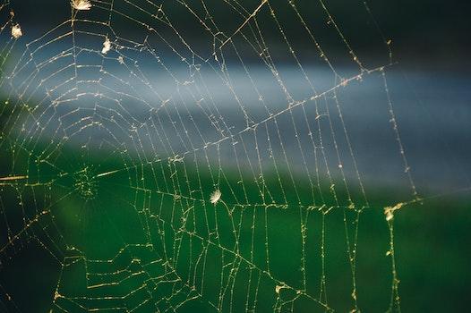 Free stock photo of cobweb, spider's web, spiderweb