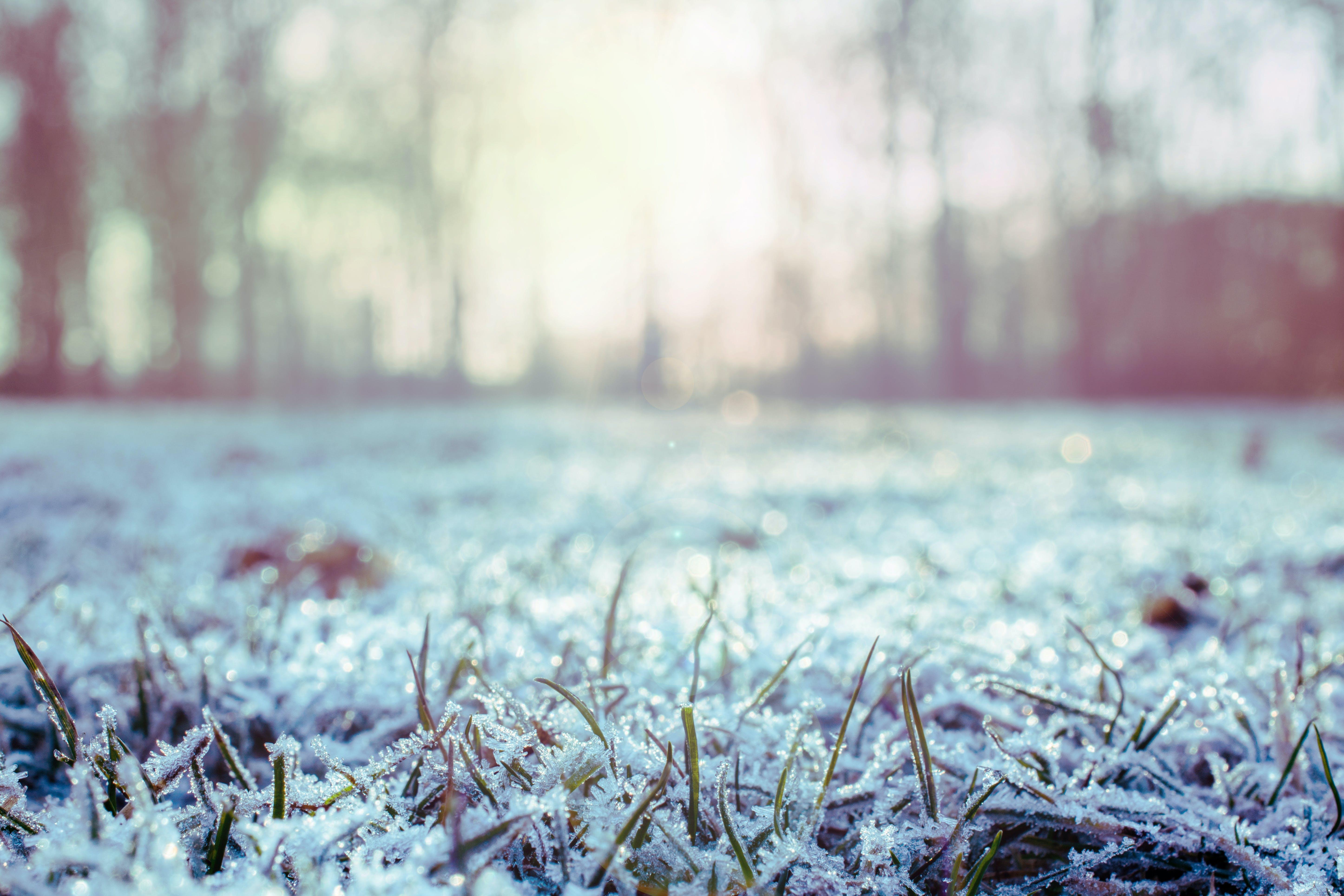 Ảnh lưu trữ miễn phí về ánh sáng ban ngày, băng, băng giá, cánh đồng