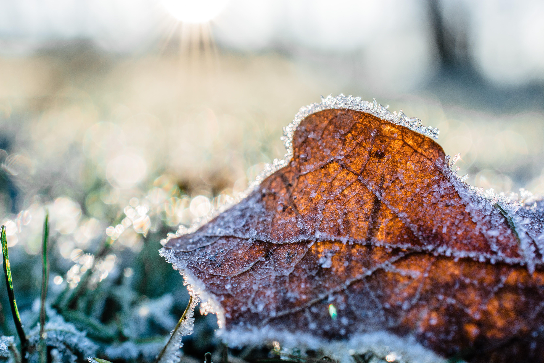 Fotobanka sbezplatnými fotkami na tému chladný, denné svetlo, detailný záber, farba