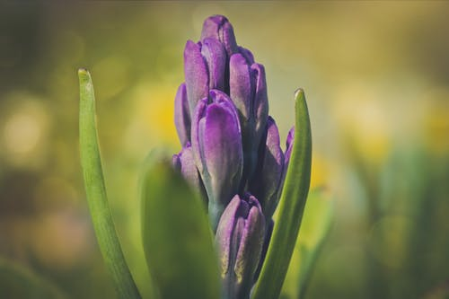 Selective Photography of Purple Clustered Flowers