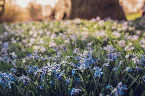 Ảnh lưu trữ miễn phí về hoa, hoa mùa xuân, Thiên nhiên, vĩ mô