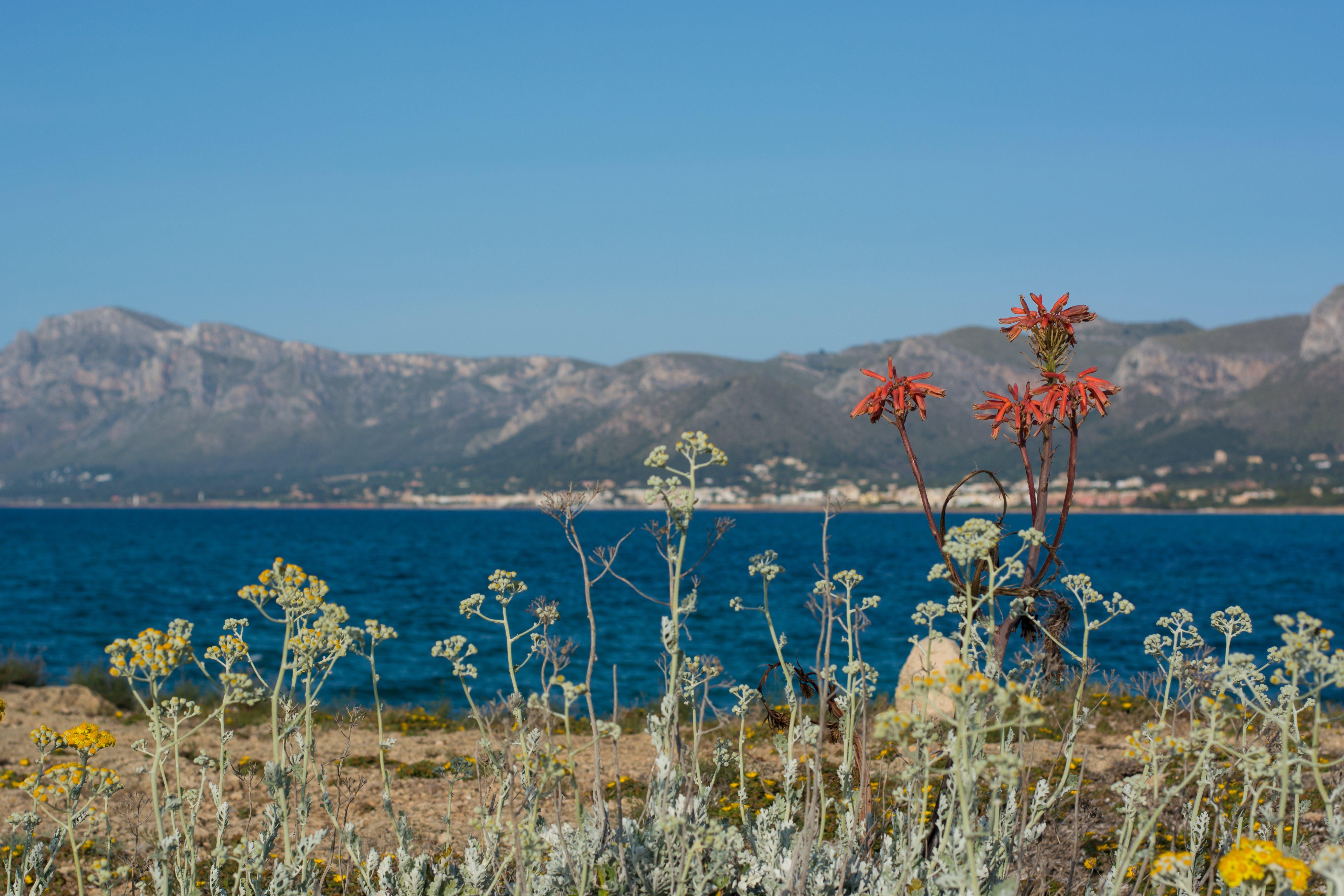 Free stock photo of blue skies, flowers, landscape, mallorca