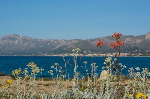 Ảnh lưu trữ miễn phí về bầu trời xanh, biển, biển Địa Trung Hải, địa trung hải