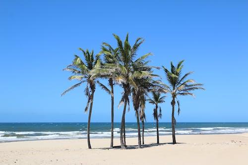 Photos gratuites de à la plage, ciel, ciel bleu