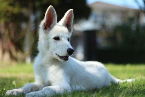 danielbendig, 可愛, 夏天, 小狗 的 免费素材照片