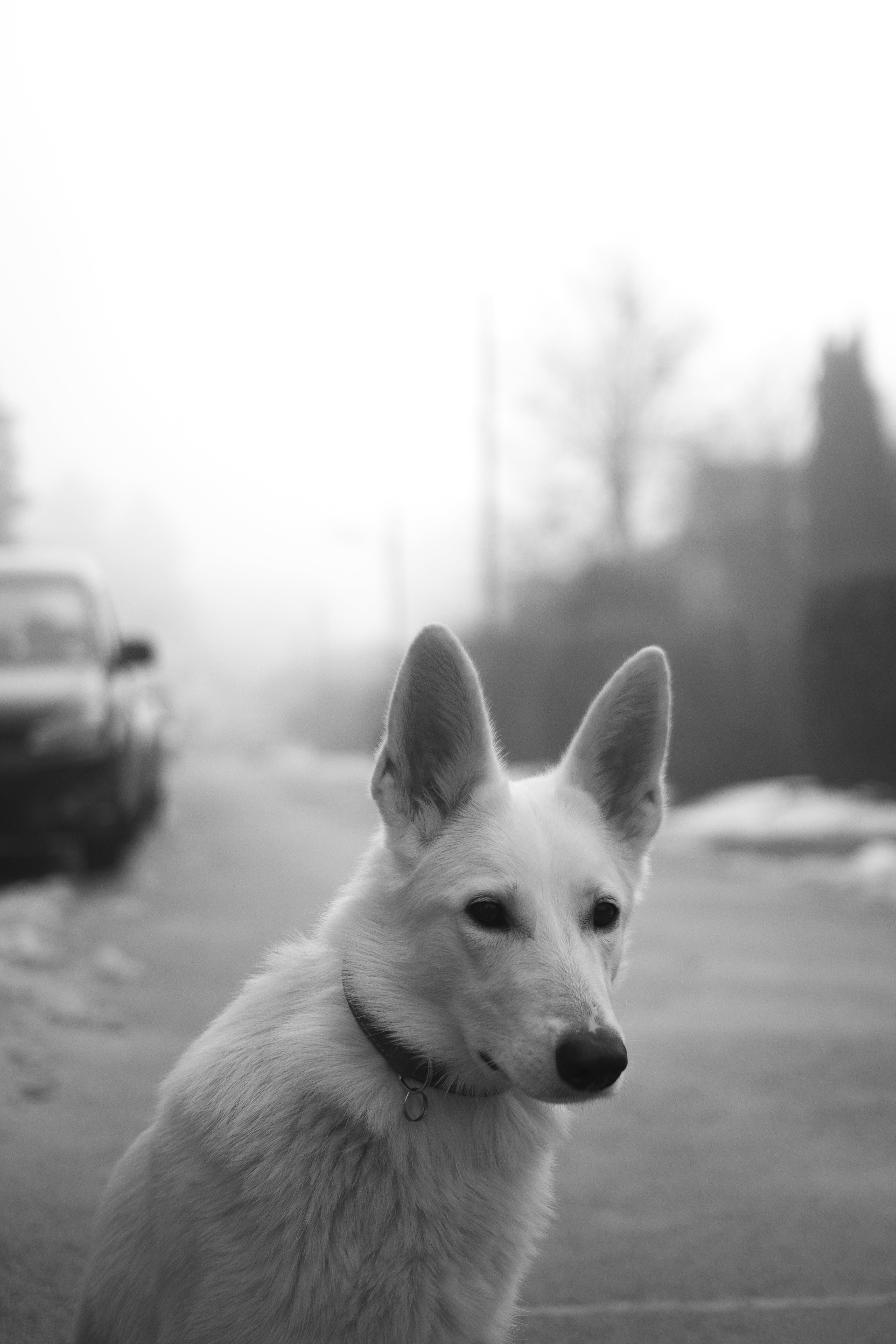 Kostnadsfri bild av däggdjur, dimma, djur, förtjusande