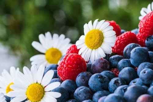 White Daisy Flower Beside Red Strawberries