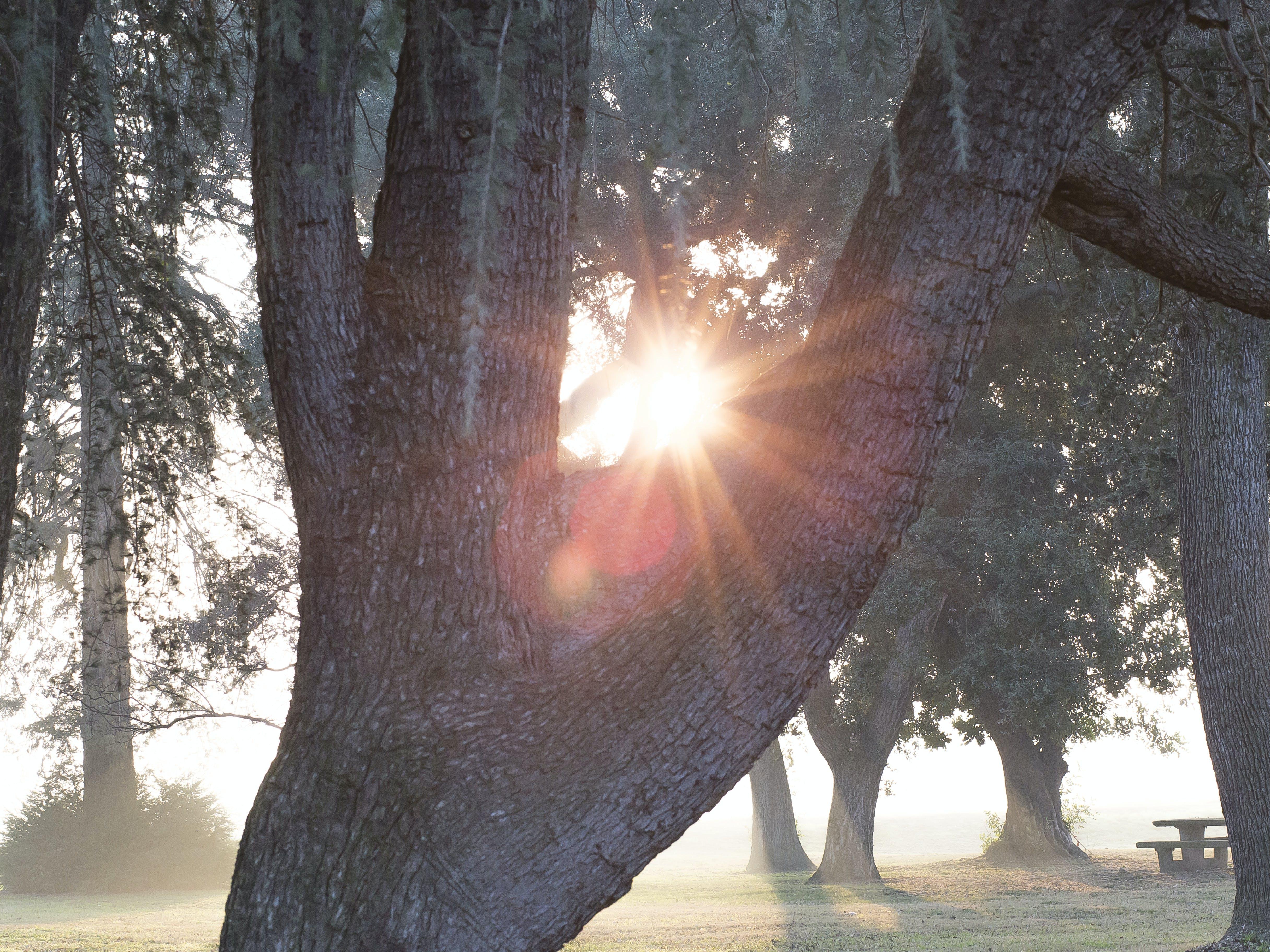 Free stock photo of park, sunlight, tree