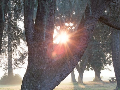 Gratis arkivbilde med park, sollys, tre